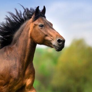 De filosofie van het paard
